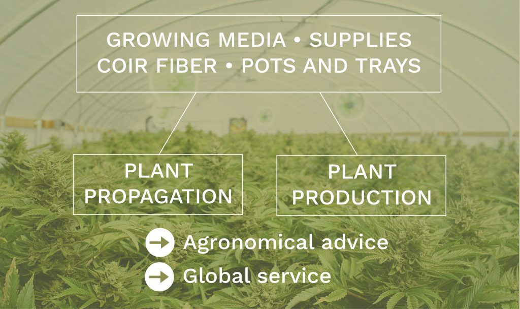 diagram of the Projar activity in cannabis world