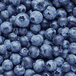 berries hydroponics technology
