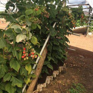 training mesh raspberry