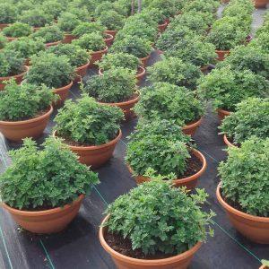 sustrato para plantas ornamentales