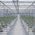 productos para cultivo cannabis