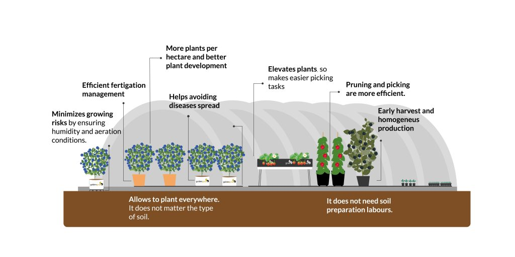 Soilless growing system