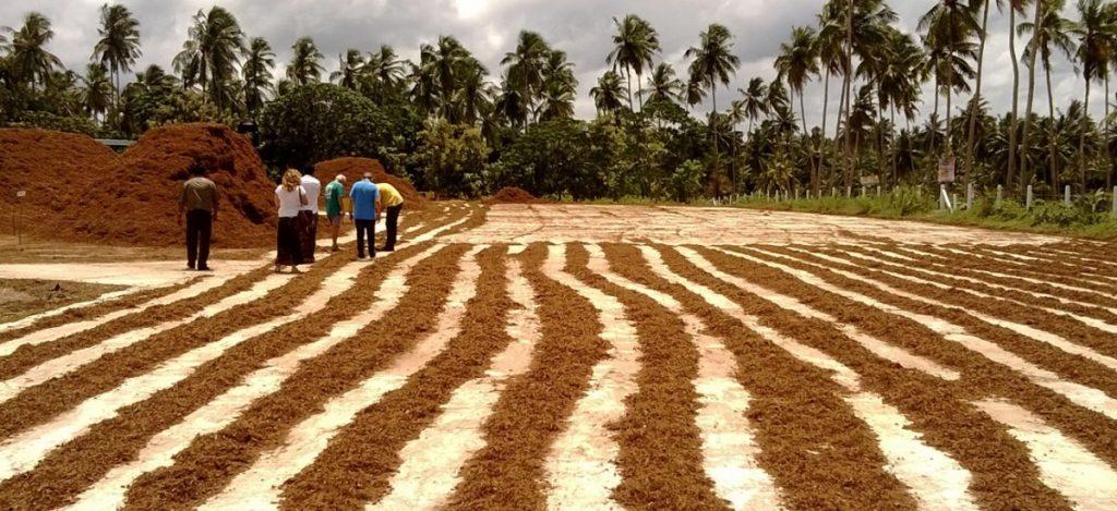 The coconut fiber processing