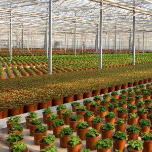 sustrato para planta ornamental