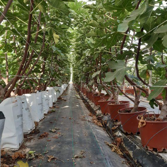 hydroponic growing easyfruit